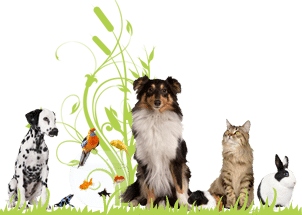 Richmond's Feed, Pet & Gifts – Elkhart County Pet Food, Pet